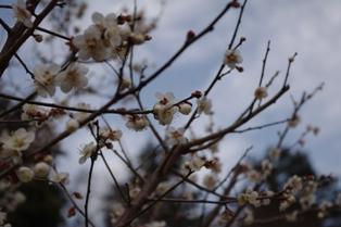 春の準備_c0130172_181530100.jpg