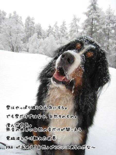 f0187974_13312244.jpg