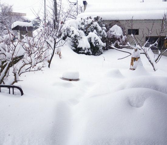 餌台が雪に埋まった日^^;_a0136293_17102835.jpg