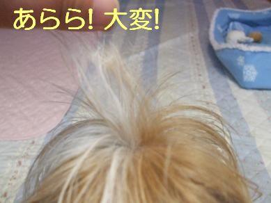 f0179203_68476.jpg