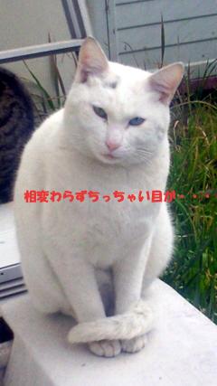 ねこ漫画_b0105719_17252721.jpg