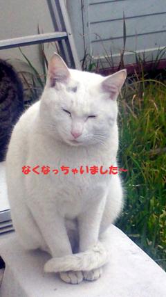 ねこ漫画_b0105719_1726073.jpg