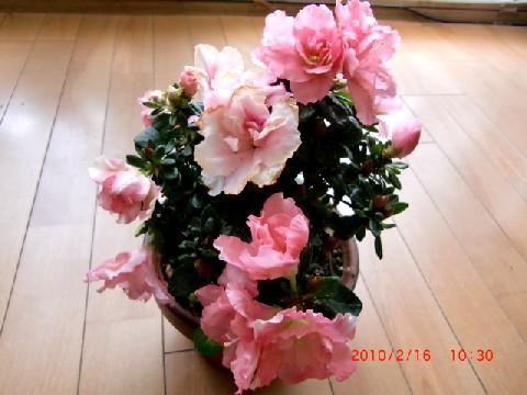 b0012636_13484026.jpg