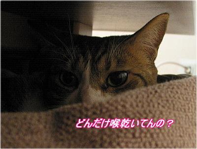 b0097848_1943073.jpg
