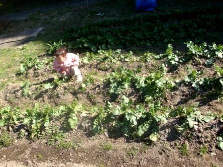 肥料でちゃった。_b0128954_13532681.jpg