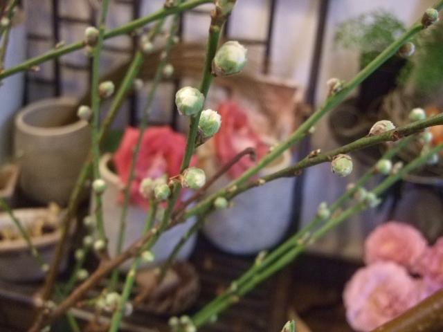 オークリーフ(桃と菜の花)_f0049672_1344445.jpg