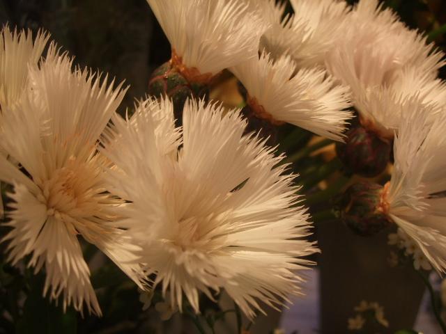 オークリーフ(桃と菜の花)_f0049672_13464540.jpg