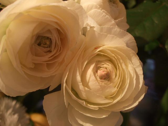 オークリーフ(桃と菜の花)_f0049672_13574479.jpg