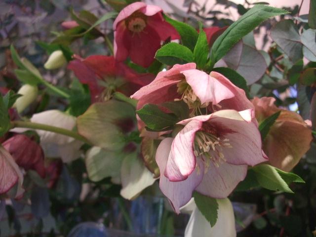 オークリーフ(桃と菜の花)_f0049672_13582350.jpg