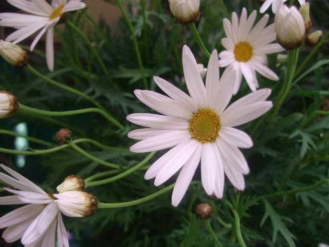 オークリーフ(桃と菜の花)_f0049672_13585329.jpg