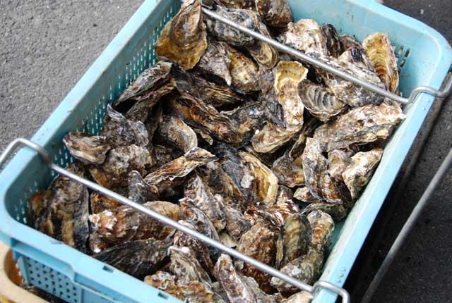 牡蠣オフ2_b0120492_18551842.jpg