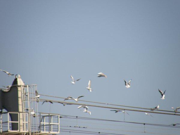 墨田川の風景_a0027125_953199.jpg