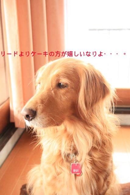 f0039538_2043232.jpg