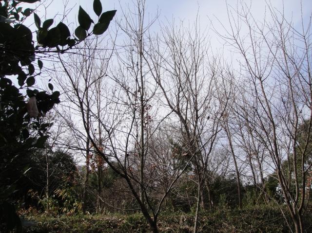 久し振りのうみべの森の散策  by  (TATE-misaki)_c0108460_15205229.jpg