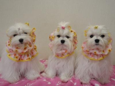 「MILK OFFICE」苺ママの3姉妹用可愛いスヌード(^.^)/_b0001465_1810734.jpg