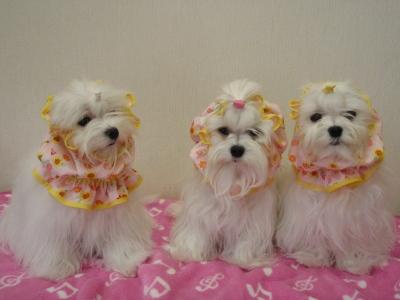 「MILK OFFICE」苺ママの3姉妹用可愛いスヌード(^.^)/_b0001465_18124730.jpg