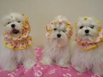 「MILK OFFICE」苺ママの3姉妹用可愛いスヌード(^.^)/_b0001465_18134033.jpg