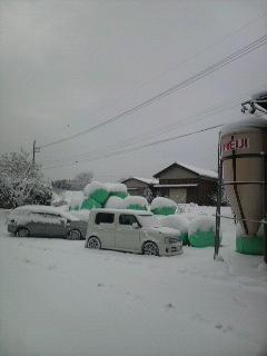 またまた雪_e0063268_8153557.jpg