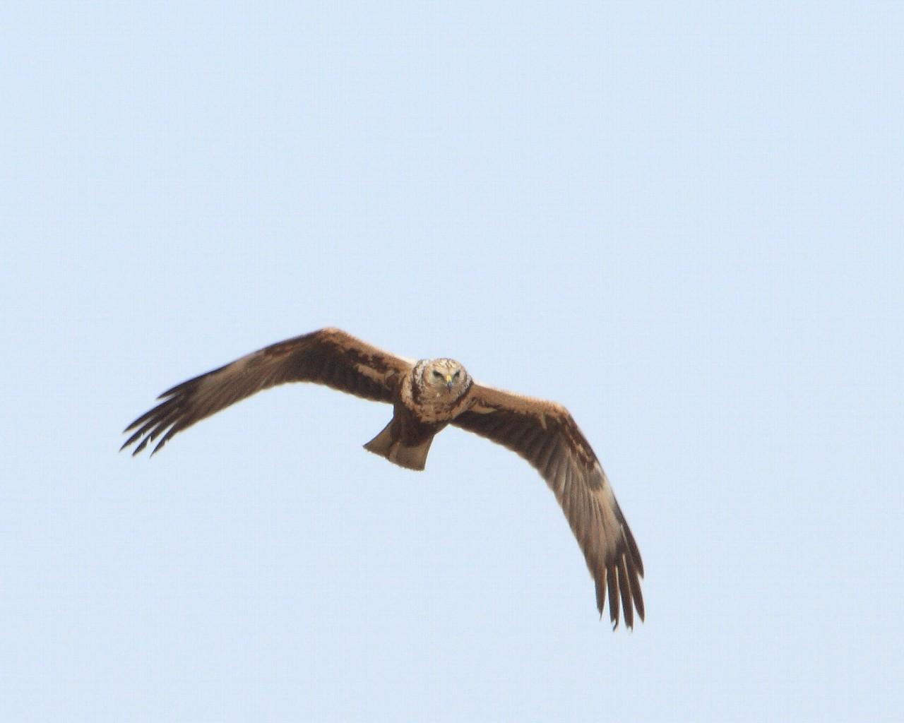 猛禽が7種類_f0105570_21235675.jpg
