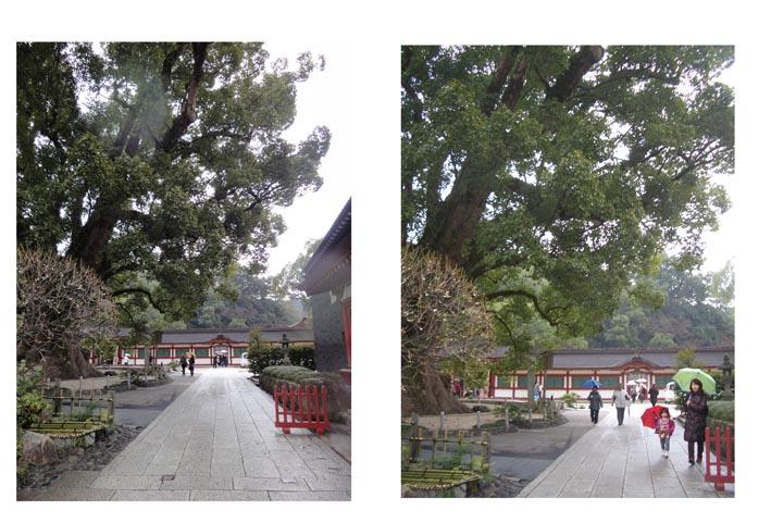太宰府 撮影_f0176370_1053251.jpg