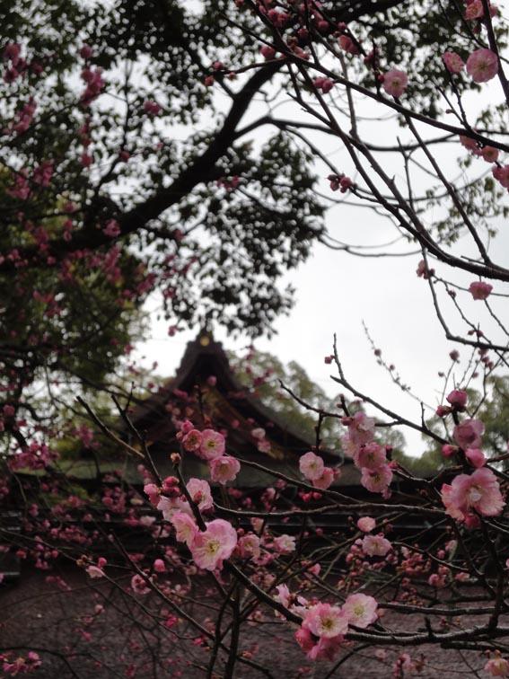 太宰府 撮影_f0176370_1124759.jpg