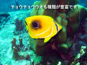 出だし好調シミラン☆_f0144385_2234433.jpg