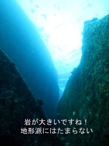 出だし好調シミラン☆_f0144385_224354.jpg