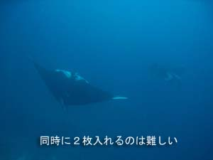 出だし好調シミラン☆_f0144385_2254270.jpg