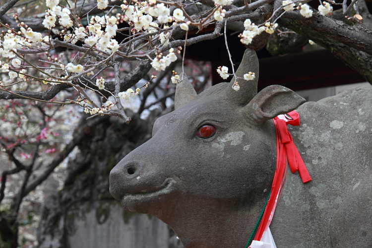 京都散策_e0051888_3501622.jpg