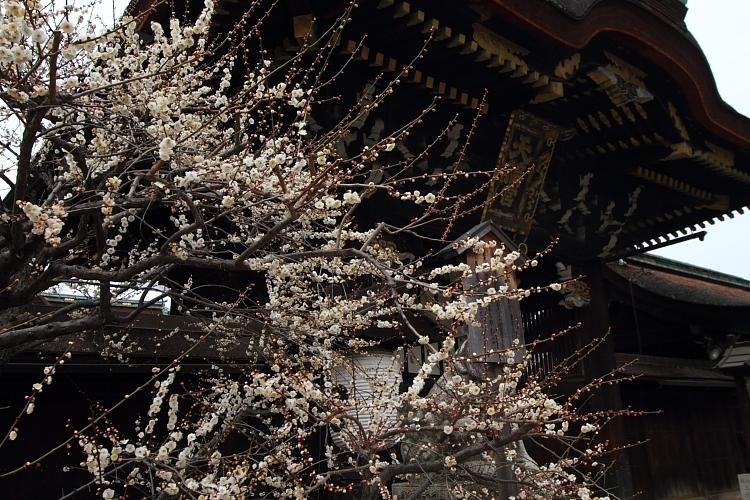 京都散策_e0051888_3511521.jpg
