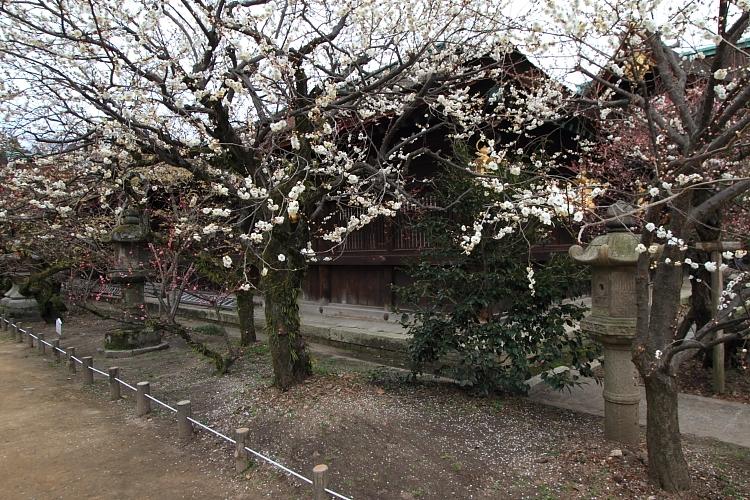 京都散策_e0051888_3514726.jpg