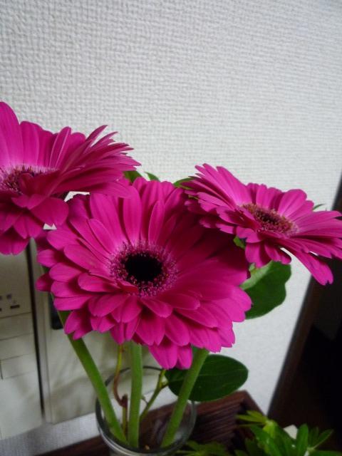 f0184700_2423684.jpg