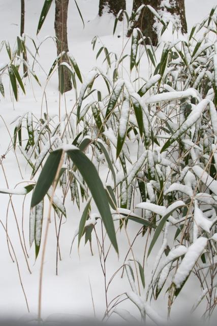 凍った枝に、雪_f0091207_2255345.jpg