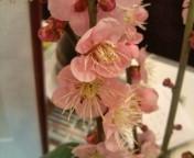 梅の花_f0206213_1812333.jpg