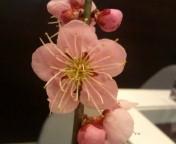 梅の花_f0206213_1813969.jpg