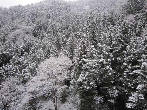 雪。_b0157216_2328117.jpg