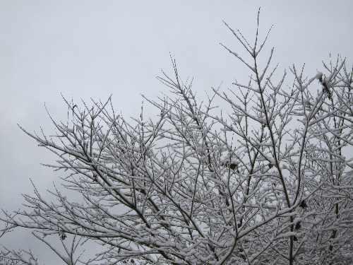 雪。_b0157216_2329115.jpg