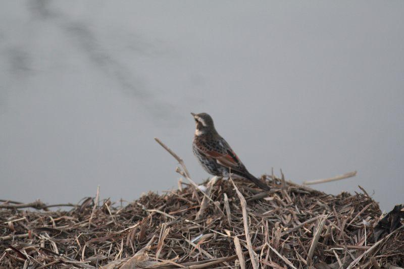 河原の鳥さん_f0100825_2212178.jpg