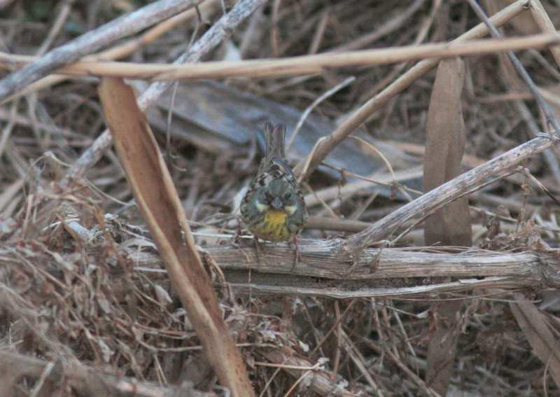 河原の鳥さん_f0100825_2225537.jpg