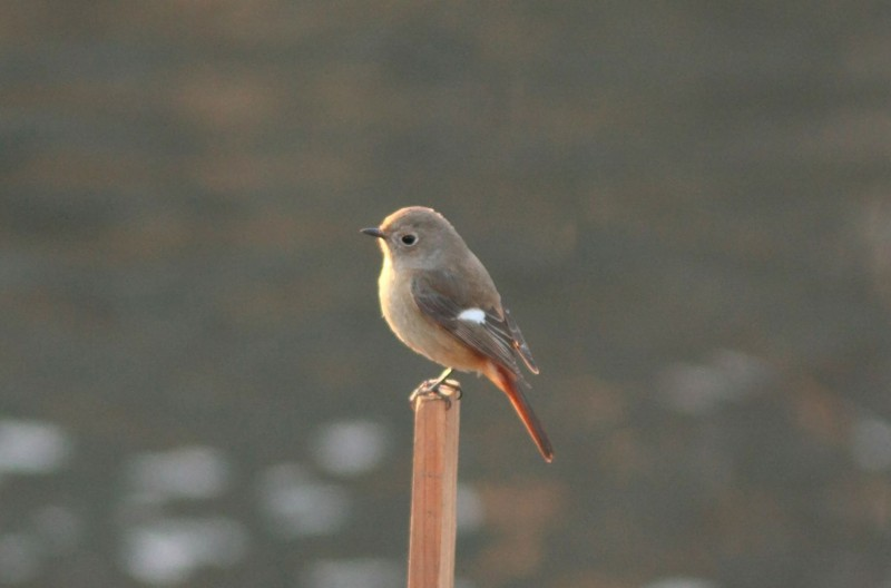 河原の鳥さん_f0100825_2241022.jpg