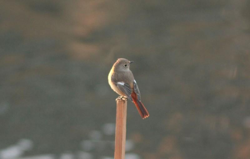 河原の鳥さん_f0100825_224534.jpg