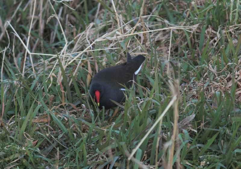 河原の鳥さん_f0100825_2254996.jpg