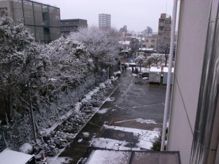 東京も雪_a0148134_20402990.jpg