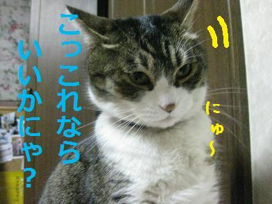 b0151748_12415771.jpg