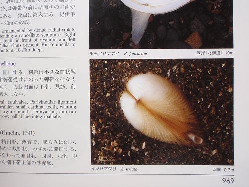 春の海_c0180460_07579.jpg