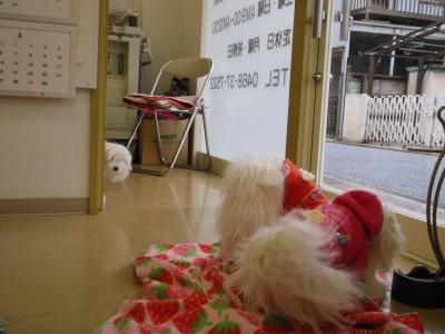 「MILK OFFICE」のお洋服&ピコムさんの新作チャーム_b0001465_1827895.jpg