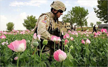 アメリカ、アフガニスタンで、ファルージャ式攻撃を準備  by Bill Van Auken_c0139575_2250132.jpg