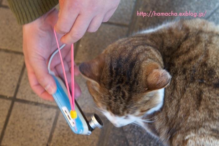 KEN3TV vs Cats in Enoshima_c0158775_2148114.jpg