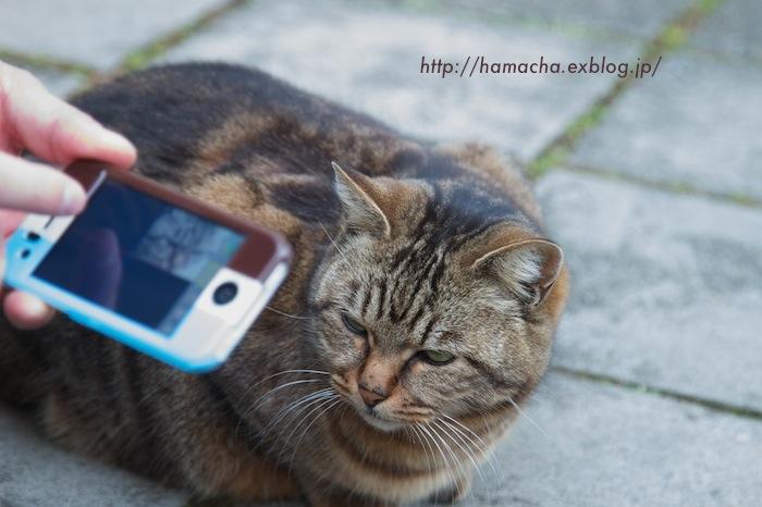 KEN3TV vs Cats in Enoshima_c0158775_21485275.jpg