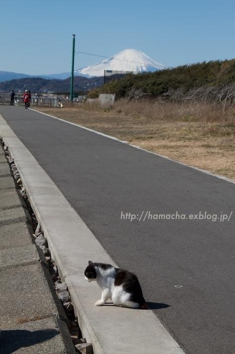 Cats in Shonan #90_c0158775_6202545.jpg